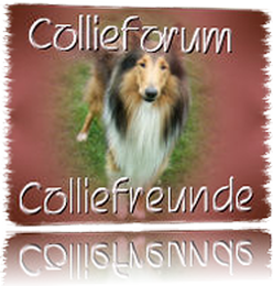 zum Collieforum